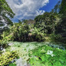 Blue Spring of Bonito River