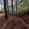 Creek in autumn forest