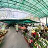 Market in Subotica