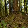 Avatar Grove, Port Renfrew, Vancouver Island