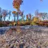 Herbstwald beim Eisenberg