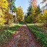Hochsitz im Herbstwald