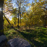 Woods3d