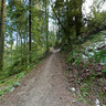 Wildwood Trail, Portland Oregon