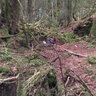 Puzzlewood Coleford Forest of Dean