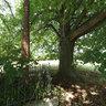 Cross under the linden tree, Vrchdobroc, Slovakia