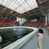The Dolphinarium in Varna