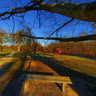 Under  old tree