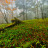 misty forest in autumn 1