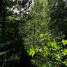 Waldpanorama oberhalb vom Bärengrund