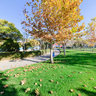 Amir Kabir Park In Autumn