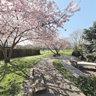 Japanischer Garten Freiburg Seepark