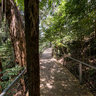 Katoomba Bushwalk