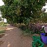 Ngo Gig Farmyard 1