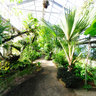 Botanischer Garten Universitt Mainz