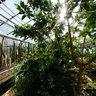 Botanischer Garten Universität Mainz