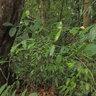 Permai Rainforest accomodations