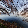 Toscanapark at Lake Constance in late fall