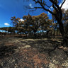 Burnt cork oak trees after a fire near the hospital