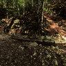 Shelter Pheasant Mountain Paiko part 2