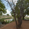Tshokwane Picnic Spot , Kruger Park - South Africa Travel Channel