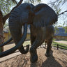 Letaba Camp: Elephant Museum , Kruger Park - South Africa Travel Channel