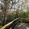 Big Cypress Bend, Fakahatchee Boardwalk, Florida