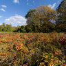 Autumn Field Colours, Hartshorne Woods, Monmouth County, New Jersey