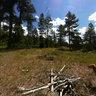 Uinta National Forrest