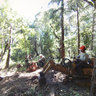 Pogonip EMUT stump removal