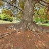 Levico Terme park, tree (Italy)