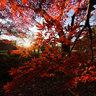新宿御苑: 紅葉