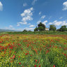 flowery field in mugello