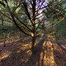Petts Wood, Bromley, UK