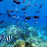Amedee Coral Reef New Caledonia