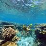 Ua Coral Reef Sphere New Caledonia