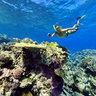 Ua Coral Reef New Caledonia