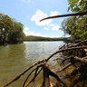 Mangrove Crabs New Caledonia Baie du Prony