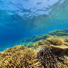 Ilot Maitre New Caledonia Coral Reef Reserve