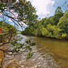 Mangroves New Caledonia