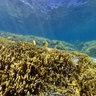 New Caledonia underwater panorama Ilot Mbo