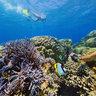 Free diving in New Caledonia - Plongée en Apnée Nouvelle Calédonie