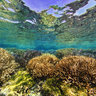 New Caledonia Coral Reef Diversity