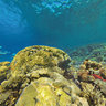 Coral Reef Scenic Ilot Kouare New Caledonia