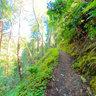 Bigsurredwoodwalk