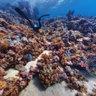 Panorama Riff 01 - Unterwasser - Rotes Meer