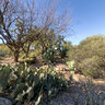 Cactus Garden, Bryce Thompson Arboretum