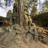 Ta Phrom
