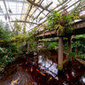 """Malaysian Garden #2 at """"De Orchideeën Hoeve"""""""