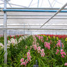 Orchid Nursery 